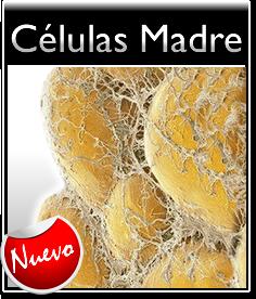 Células Madre Mesenquimales de Grasa